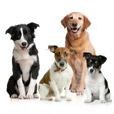 dog health problems