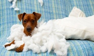 eczema in dogs