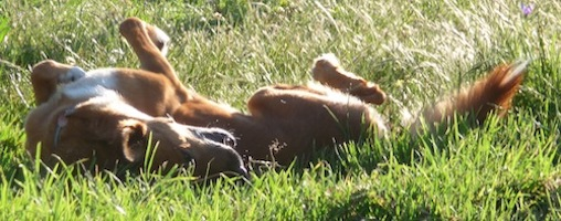 Holistic Dog Care – Three Important Areas