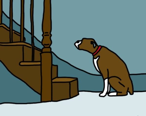 what can you give a dog for joint pain
