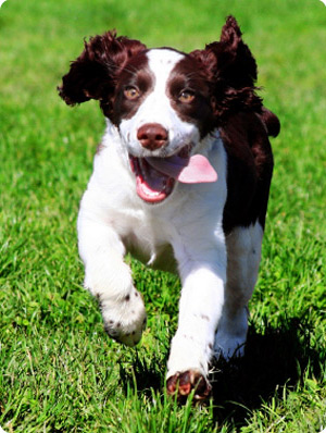 what is the best pet insurance for dogs