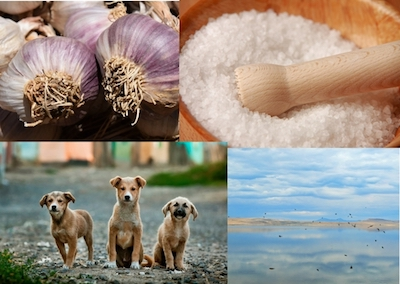 Natural Antibiotic For Dogs – Look at the Big Picture