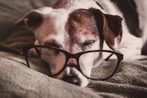 blindness in dogs