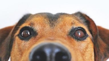 dangers in feeding dogs raw meat