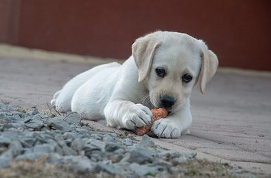 canine gastro-intestinal problems