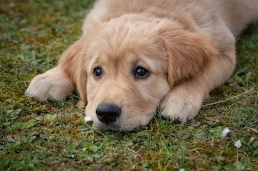 convulsions in dogs holistically