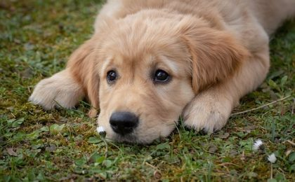 a healthy dog needs a healthy microbiome